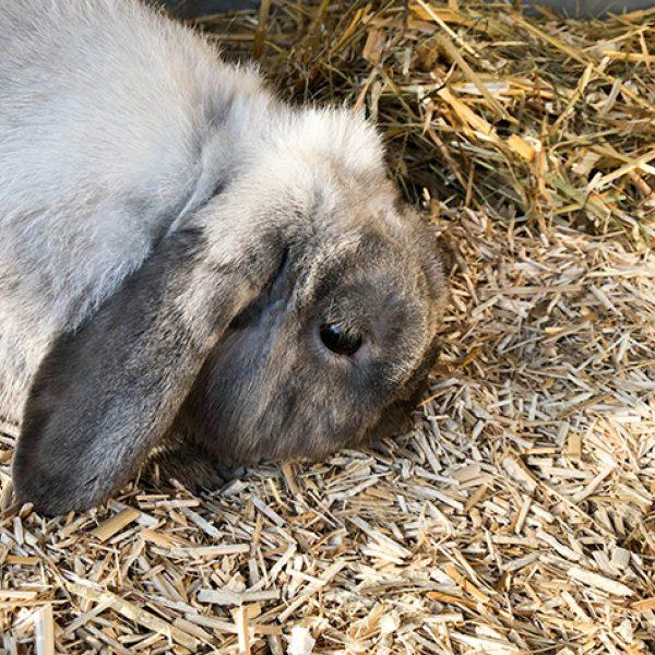 Dierstrooisel konijn_1