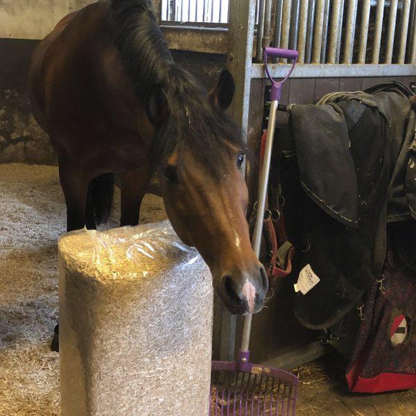Dierstrooisel paard_1